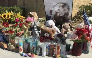 Victim's family raise bail questions after Zaon Collins case